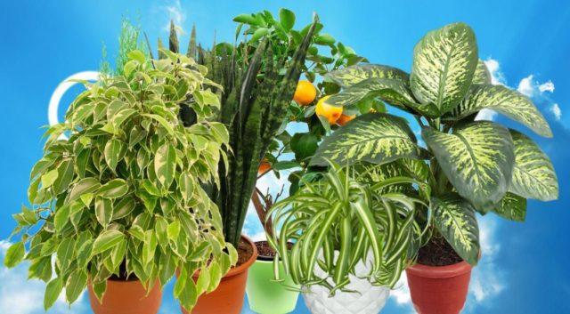 7 комнатных растений очищающие воздух