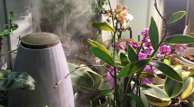 Полив орхилей