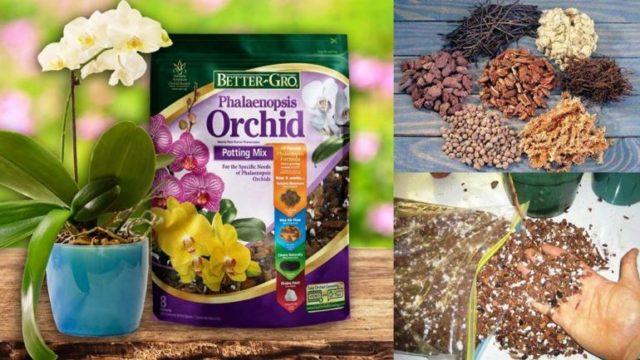 Субстрат для пересадки орхидеи
