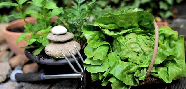 Посадить салат