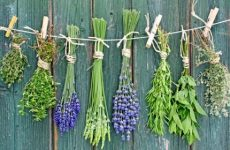Травы, растения, применяемые для защиты сада
