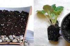 Субстраты для комнатных растений