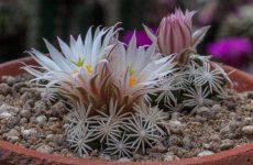 Как правильно ухаживать за кактусами зимой