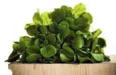 Клоповник посевной или кресс-салат