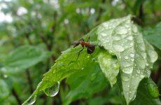 Борьба с муравьями в саду и цветнике