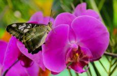 Какая орхидея вам подходит