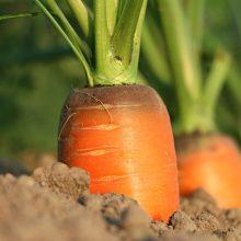 Плохой урожай овощей. Работа над ошибками