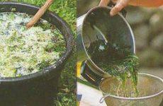 Полезная подкормка для растений