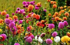 Интересные факты о цветах и растениях садовых