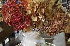 Как сохранить цветы гортензии для зимнего букета