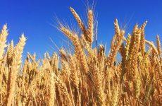 Зернохранилища и очистка зерна
