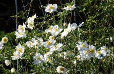 Какие многолетники цветут все лето