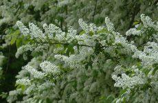 Календарь народных примет о погоде мая для садоводов