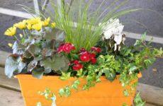 7 комнатных растений для очистки воздуха