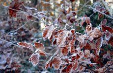 Календарь народных примет о погоде ноября