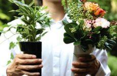 В какой день недели приобретать цветы и растения