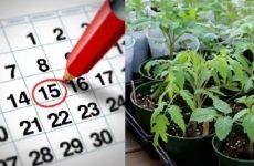 Лунный посевной календарь садовода-огородника на 2020 год
