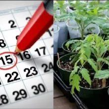 Лунный посевной календарь для садоводов на 2020 год
