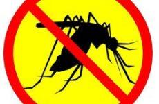 Всё, что нужно знать о борьбе с комарами