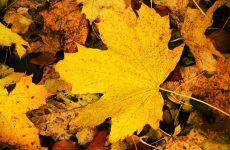 Календарь – Народные приметы о погоде в октябре