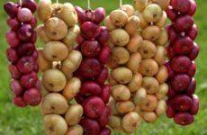 Как правильно собирать и хранить урожай