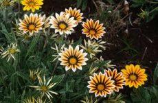 Многолетние растения для вашего сада
