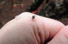 Уничтожитель и отпугиватель комаров, жизнь без укусов и аллергии