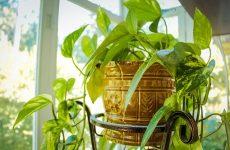 Комнатные растения – живые нотки интерьера