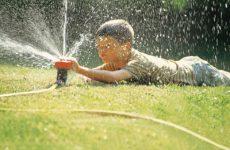 Правила грамотного полива садовых растений