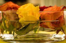 Положительная энергетика цветов в квартире