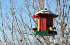 Как привлечь птиц на садовый участок