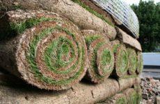 Плюсы и минусы рулонного и посевного газонов