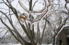 Народные приметы января о погоде