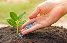 Какие удобрения нужны комнатным растениям